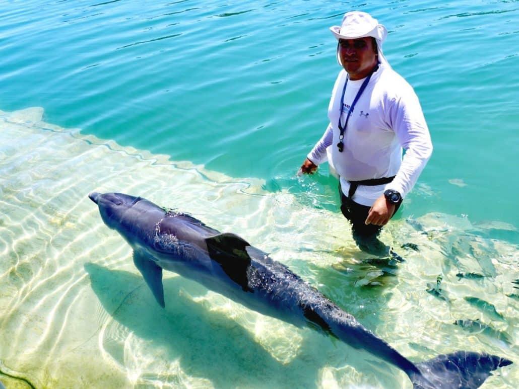 Ausflug Delfine hautnah – Tour Cayo Blanco Kuba